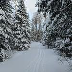 Leaf Lake Ski Trail Jan 19, 2020