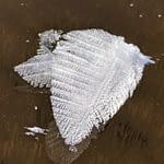leaf crystal 7 Papineau Lake Dec 2020