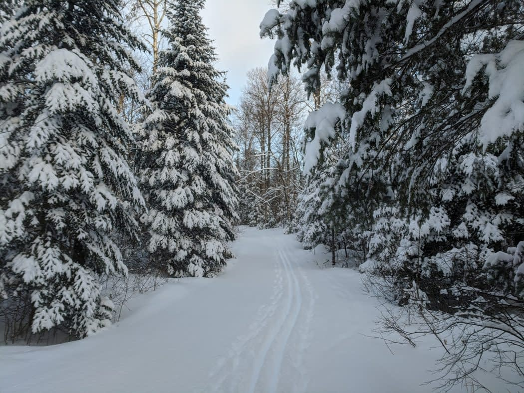 Leaf Lake Ski Trail Jan 19, 2020