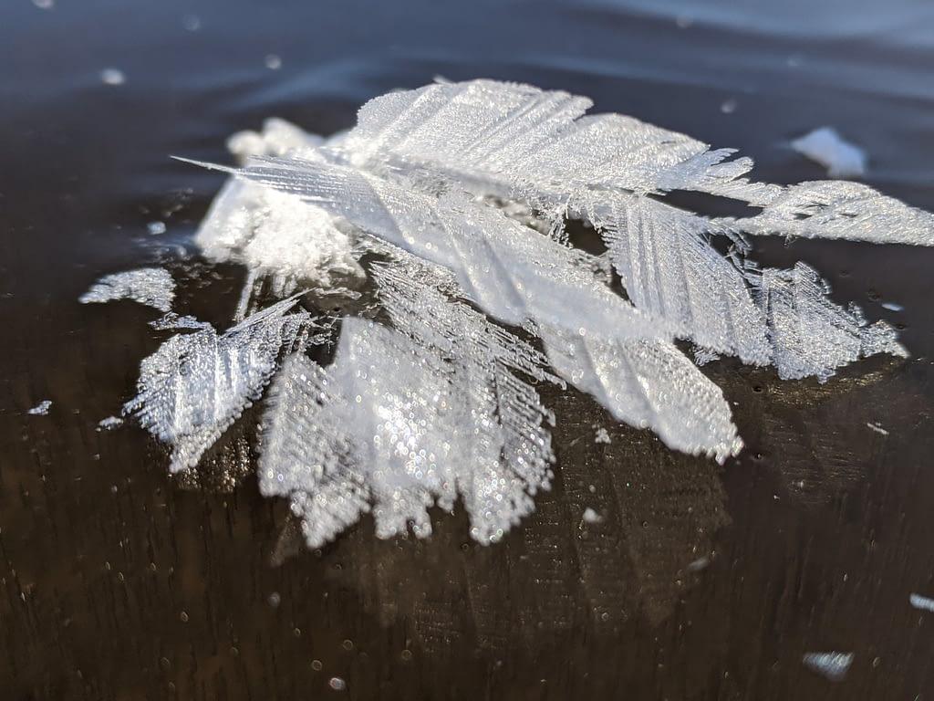 leaf crystal 6 Papineau Lake Dec 18 2020