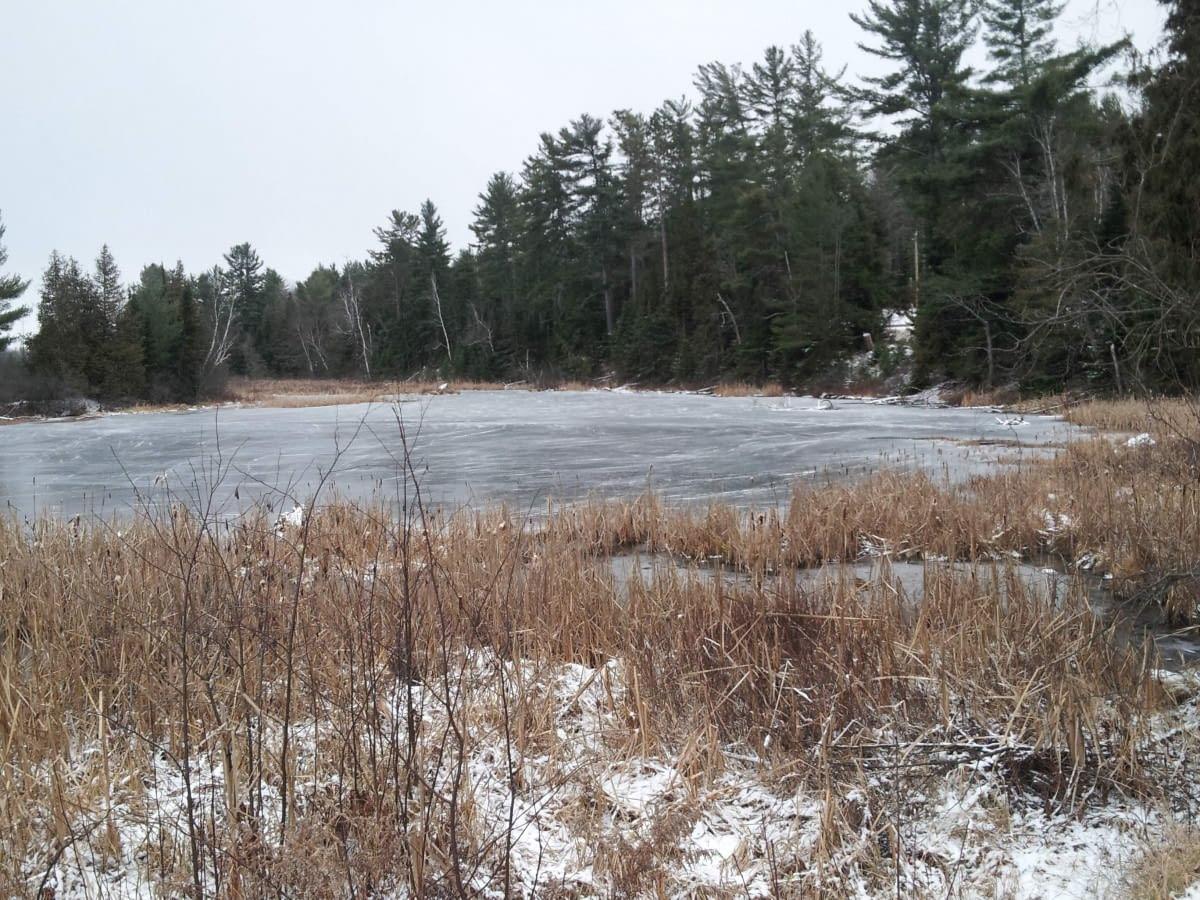 St. Joseph's House pond